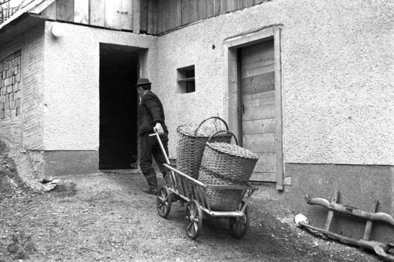 Dovoz plodín v košoch na drevenom vozíku. Liptovská Teplička (okr. Poprad), 1971. Archív negatívov Ústavu etnológie SAV v Bratislave. Foto: N. Tomanová
