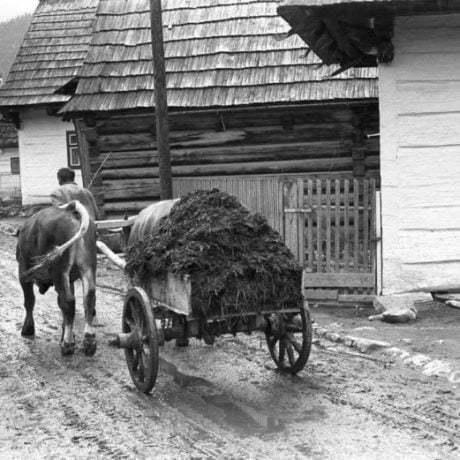 Odvoz hnoja na dvojkolesovej káre. Liptovská Teplička (okr. Poprad), 1971. Archív negatívov Ústavu etnológie SAV v Bratislave. Foto: N. Tomanová