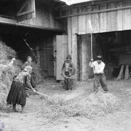 Mlátenie cepami. Hruštín, okr. Námestovo. Foto J. Dérer, 1958. Archív negatívov SNM Martin.