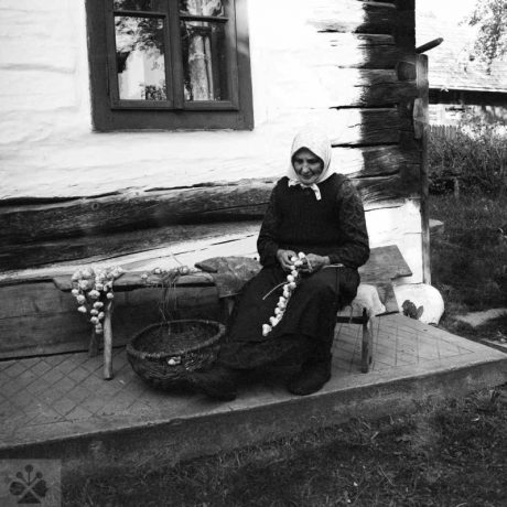 Viazanie cesnaku do tzv. vrkočov.  Žiar (okr. Revúca), 1966, Archív negatívov Ústavu etnológie SAV v Bratislave. Foto: J. Dérer