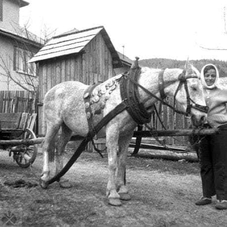 Kôň v chomúte. Heľpa (okr. Brezno), 1973. Archív negatívov Ústavu etnológie SAV v Bratislave. Foto: V. Nosáľová