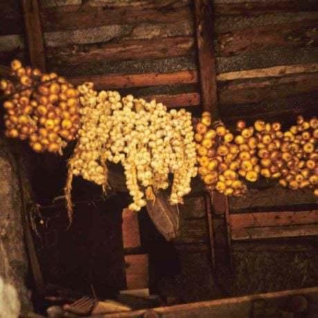 Sušenie cibule a cesnaku, zapletených do vrkočov na povale. Brhlovce (okr. Levice). 1972. Archív diapozitívov Ústavu etnológie SAV v Bratislave. Foto: R. Mikulová
