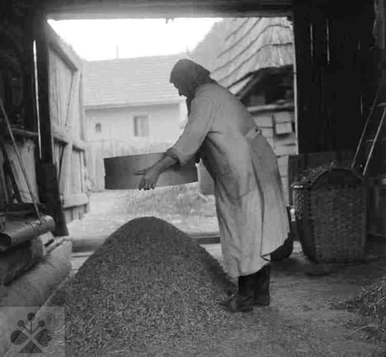 Cúdenie riečicou. Smolenice, okr. Trnava. Foto J. Ušak, 1967. Archív negatívov Ústav etnológie SAV.