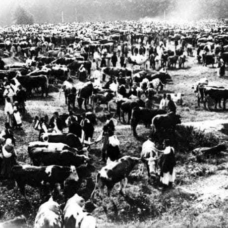 Dobytčí trh v meste. Brezno, 1. polovica 20. storočia. Autor neznámy. Archív fotografií Slovenského národného múzea v Martine