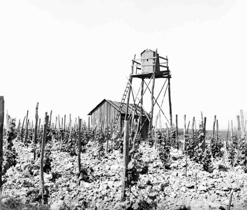 Strážna veža v družstevných viniciach. Krčava (okr. Michalovce), 1966. Archív negatívov Ústavu etnológie SAV v Bratislave. Foto: E. Kahounová