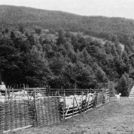 Košiar s prútenými lesami. Malá Lomná, okr. Rožňava. Foto K. Chotek, 1955. Prevzaté z  Podolák, J.: Tradičné ovčiarstvo na Slovensku. Bratislava 1982.