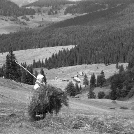 Zhrabávanie sena na Vyšných Poľanách. Liptovská Lúžna (okr. Ružomberok), 1960. SNM