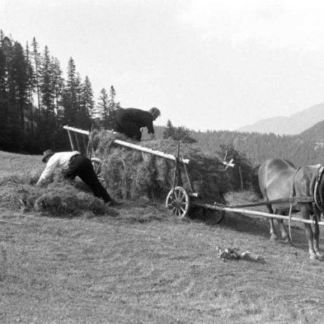 Nakladanie sena voz pri zvážaní sena z Vyšných Poľán. Liptovská Lúžna (okr. Ružomberok)