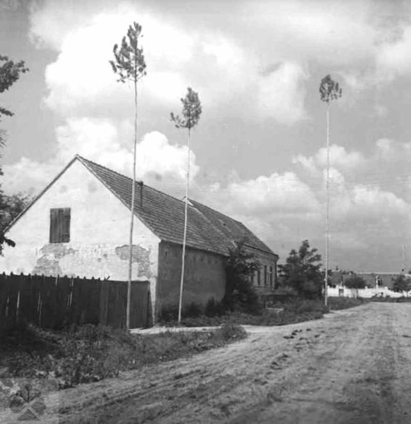 Postavené máje. Láb (okr. Malacky), 1953. Archív negatívov Ústavu etnológie SAV v Bratislave. Foto: F. Hideg