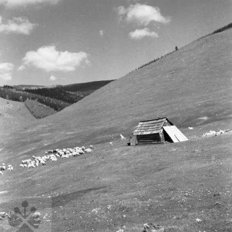 Salaš. Heľpa, okr. Brezno. Archív negatívov Ústav etnológie SAV. Foto. F. Hideg, 1960.