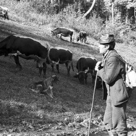 Pastier hovädzieho dobytka. (miestna časť obce Belá-Dulice, okr. Martin), 1971. Archív negatívov Ústavu etnológie SAV v Bratislave. Foto J. Botík.