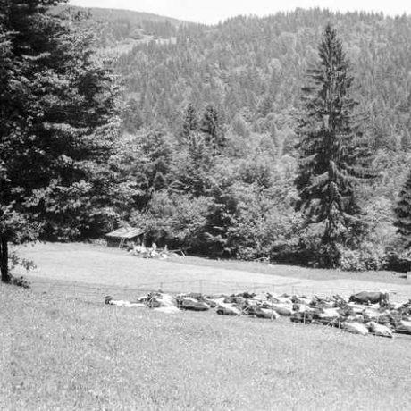 Salaš pre hovädzí dobytok. Horná Lehota, okr. Dolný Kubín. Archív negatívov Ústav etnológie SAV. Foto J. Botík, 1970.