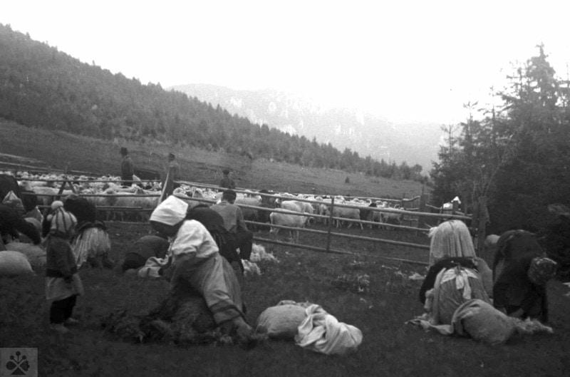 strihanie oviec - Centrum pre tradičnú ľudovú kultúru 95891b01cb7