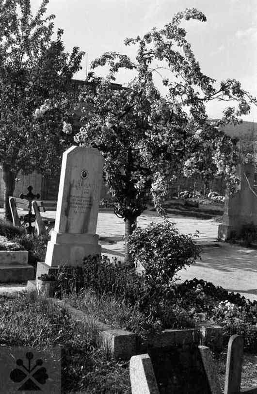 V záhlaví hrobu zasadená ozdobná čerešňa. Bratislava, miestna časť Rača, 1973. Archív negatívov Ústavu etnológie SAV v Bratislave. Foto: S. Kovačevičová