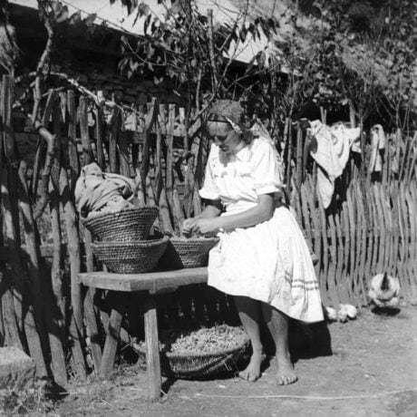 Lúštenie strukovín na dvore. Nelokalizované, 1952, Archív negatívov Ústavu etnológie SAV v Bratislave.