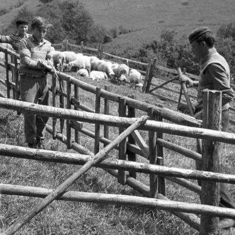 Strunga. Muránska Dlhá Lúka, okr. Revúca. Archív negatívov Ústav etnológie SAV. Foto J. Kantár, 1961.