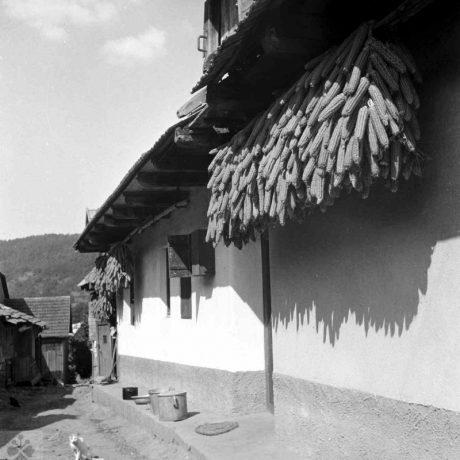 Kukurica zavesená na podstení domu. Hontianske Tesáre (okr. Krupina), 1958, Archív negatívov Ústavu etnológie SAV v Bratislave. Foto: S. Kovačevičová