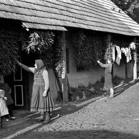 Sušenie papriky a kukurice na podstení domu. Nelokalizované, 50. roky 20.storočia. Archív negatívov Ústavu etnológie SAV v Bratislave.